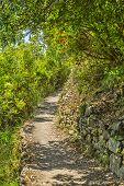 Footpath In Cinque Terre National Park
