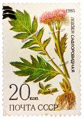 Stamp from USSR, shows medicinal plant from Siberia