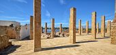 Skeleton of columns