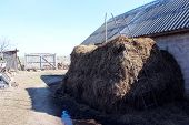 picture of excrement  - big heap of the dung besides the shed - JPG