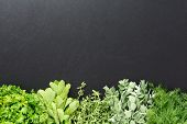 picture of oregano  - Dark background with fresh green herbs at the bottom Including mint thyme dill oregano and parsley - JPG