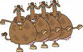 Cow Chorus Line