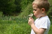 Boy and dandelion