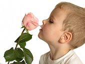 boy with rose