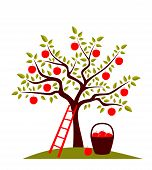 stock photo of apple tree  - vector apple tree - JPG