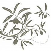 Olive branch. Vector floral background.