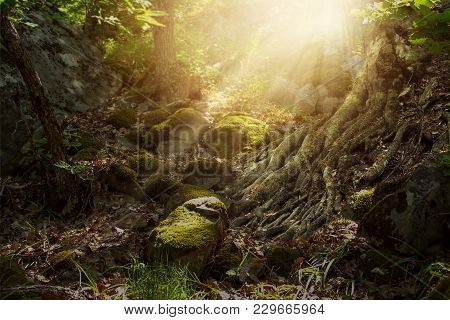 Fantasy Elf Forest With Rocky