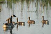 Life In The Wetlands
