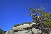 Tree Top San Jacinto