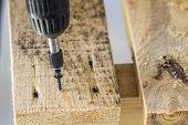 Workers Hand With Electric Screwdriver Screwing A Screw Into Wooden Board poster