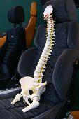 Wirbelsäule auf einem Autositz
