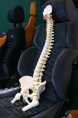 Columna vertebral humana en un asiento de coche