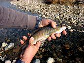 Predatory Fish In Hands