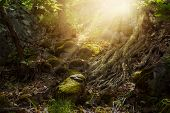 Fantasy Elf Forest With Rocky Trail And Mighty Tree Roots, Mystic And Dreamy Mood poster