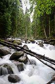 picture of irish moss  - White falls In Wood - JPG