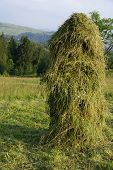 Slope of hay