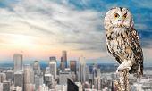 Beautiful Great Owl One Animal Studio Shot Animal Themes Wild Animal poster