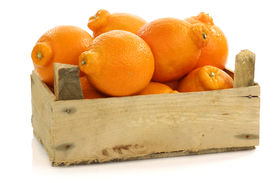 stock photo of tangelo  - fresh and colorful  Minneola tangelo fruit in a wooden crate on a white background - JPG