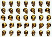 Golden skull 360 degree