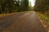 Forest Road.road In The Autumn Forest.yellow Leaves On The Road And Green Grass Along The Road poster