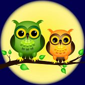 Owls On Branch With Full Moon