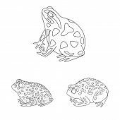 Vector Design Of Amphibian And Animal Logo. Collection Of Amphibian And Nature Stock Symbol For Web. poster