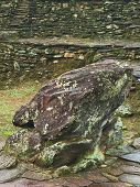 Frog Stone in Ciudad Perdida, Colombia