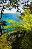 Subtropical forest of Abel Tasman NP, New Zealand