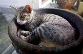 Cat Lying In Flower Pot