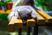 Playful Domestic Cat Lying On Wooden Bench With Bent Paws. Shot In Backlight At Sunset. Very Shallow poster