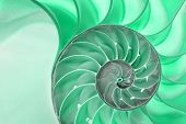 stock photo of fibonacci  - Detailed photo of a halved backlit  green shell of a chambered nautilus  - JPG