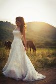 Bride In A Field With Horses