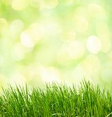 Abstract green natural background. Fresh spring grass  on defocused light green background.