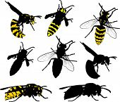 illustration with wasps collection isolated on white background