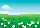 blossom summer