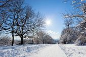 image of icy road  - Deserted straight rural tree lined road covered in heavy winter snow with a section cleared down the centre for motor vehicles - JPG