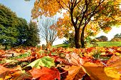 Autumn, fall landscape in park. Colorful leaves, sunny blue sky.