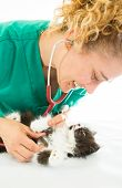 Veterinary With Kitten