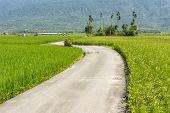 Rural scenery of a road across the paddy farm in Hualien, Taiwan, Asia.