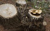 Tree Trunk Toadstools