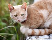 portrait Of A Beautiful Red Cat On A Green Background
