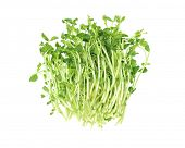 Bundle Of Fresh Pea Sprouts Lying On White Background