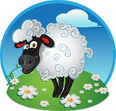 Sheep with blade of grass on color background