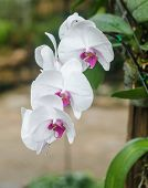 foto of orquidea  - Close up of beautiful orchid in the nature  - JPG