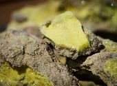 Brimstone - Volcanic Sulfur Ore Sample