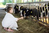 Little girl in white coat feeds of hay small calves at large farm.