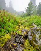 Fragment of foggy and rainy Bagley Lakes Trail at Mount Baker Park in Washington, USA