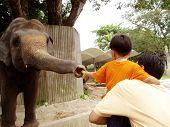 Comida de elefante