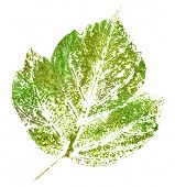 green stamp of leaf isolated on white