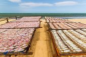 stock photo of squid  - Dried Squid traditional squids drying in the sun and blue sky in a idyllic fishermen villageThailand - JPG